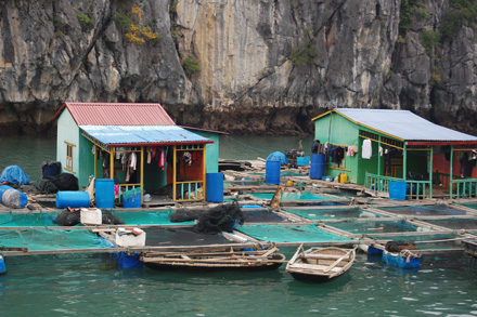 Floating village outside Cat Ba Island